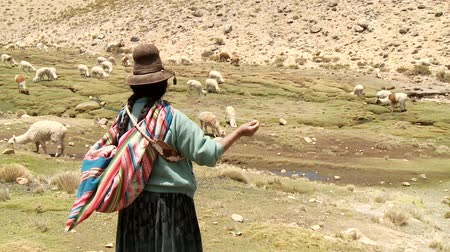 farmer animals : Countrywoman spinning wool in the Andes of Peru. November 2010 ? Farmer woman spinning Alpaca-Wool in the Andes of Peru, near by Arequipa Stock Footage