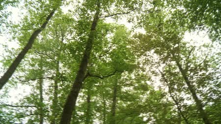 bitki : video footage of a forest in germany