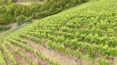 Aerial video footage of winegrowing in germany at the river Ahr