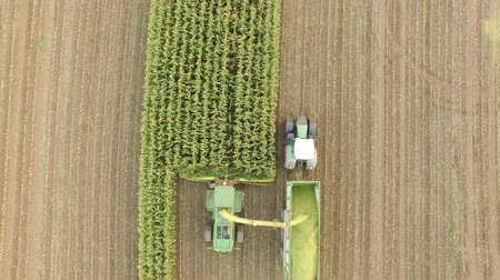 verim : Aerial video of harvesting a corn field in germany with a combine harvester Stok Video