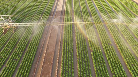 Aerial video footage of a irrigation plant watering a field salad. Summer 2015 in Germany. UHD 4K resolution from a copter Stock Footage