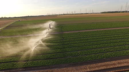 4K Aerial video footage: Industrial irrigation of a lettuce field in germany. Stock Footage