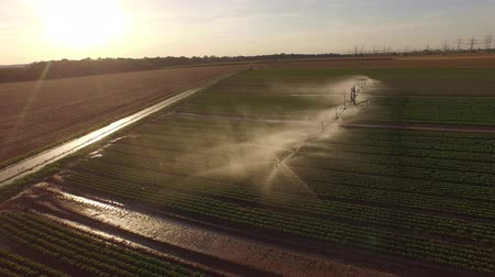 4K Aerial video footage of a sprinkler system on a salad field in summer in germany.