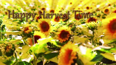 подсолнухи : Sunflower Happy Harvest Time features a field of sunflowers blowing in the wind with light streaks and an animated Happy Harvest Time message