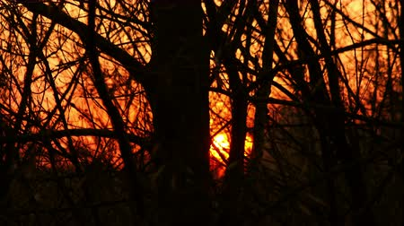 délre : Sunset Through Forest Trees Silhouettes Time Lapse 4K Video