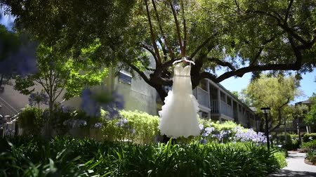 Wedding dress on a tree