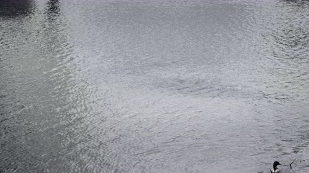 trancado : Peaceful water surface in the lake with small waves. Landscape reflections on lake. Background footage, low depth of field. Static day stabilized v-log shot Stock Footage