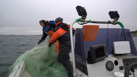 subsistence : Fishermen take out the network with the catch in the Baltic sea.