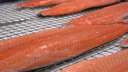 čištěný : Workers put the pieces of salmon fillet on a table for salting. Close up.