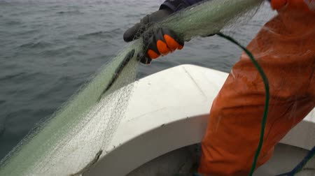 subsistence : Fishermen take out the network with the catch in the Baltic sea. Close up
