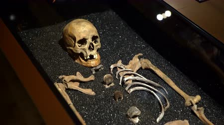 vasa : STOCKHOLM, SWEDEN - MAY 31, 2016: The skeleton of a sailor in the Naval Museum Vasa in Stockholm. Dolly shot.