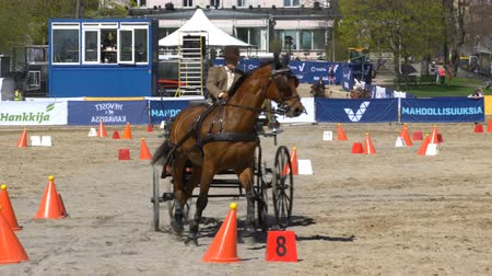 cavalo vapor : HELSINKI, FINLAND - MAY 20, 2017: Show horse carriages during the city public festival Horses in the park Kaivopuisto. Vídeos