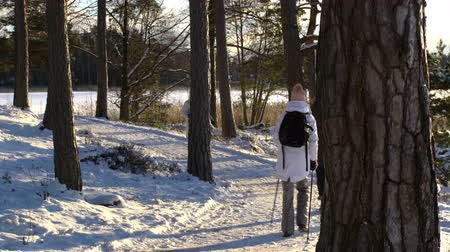 soğuk : Nordic walking - winter sport for all ages. Active people different ages hiking in snowy forest. Scenic peaceful scandinavian landscape. Stok Video
