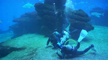 Майорка : scuba divers under water Aquarium with plants and tropical colorful fishes