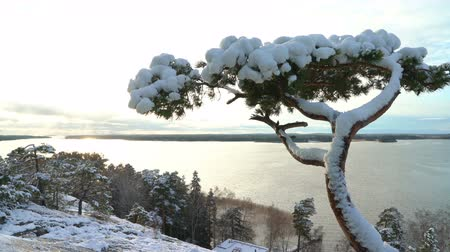 balti tenger : Scandinavian landscape. Lonely pine covered snow on a rock over the Baltic Sea. Finland in the early winter