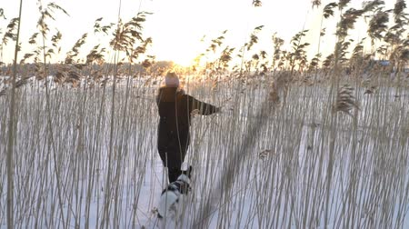 kamış : Winter fun snow vacation. Young woman with dog walking among the reeds on the beach of the frozen sea, lake in sunny day in Scandinavia. Slow motion