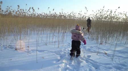 sazlık : Winter fun snow vacation. Young woman with little girl and dog walking among the reeds on the beach of the frozen sea, lake in sunny day in Scandinavia.