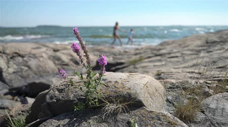 fince : A young slender woman and her daughter are walking among the coastal rocks on the beach in Finland. Stok Video