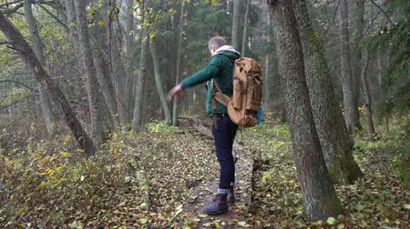 чаща : A middle-aged man with a backpack walks along an ecological natural educational trail through the northern autumn forest. Watching wildlife with binoculars in a nature park in Finland. Slow motion Стоковые видеозаписи
