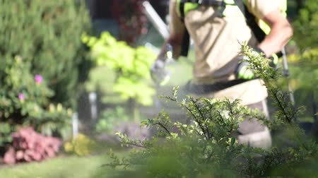 bahçıvan : Caucasian Gardener with Professional Insecticide Garden Equipment Spraying Trees. Stok Video