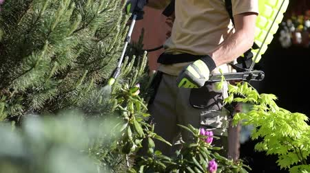 bahçıvan : Garden Insecticide by Spraying. Caucasian Worker in His 30s Spraying Garden Trees Using Professional Equipment to Kill Insects. Stok Video
