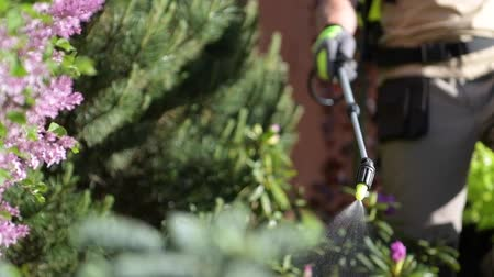 bevruchting : Spraying Insecticide on the Garden Tree. Closeup Photo. Saving Plants Theme.