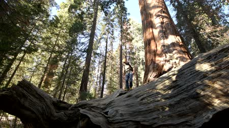 erdészet : Sequoia Forest Hiker. Caucasian Men Seating on Ancient Fallen Sequoia Tree Log. Exploring Kings Canyon and Sequoia National Parks in California,