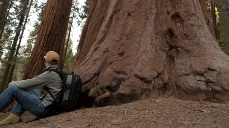 erdészet : Caucasian Hiker in His 30s with Backpack Relaxing Under Giant Sequoia Tree. California, USA.