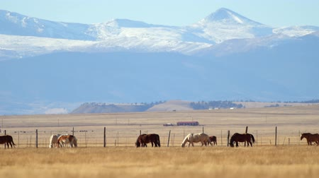 konie : Colorado Prairie Ranch with Horses and Rocky Mountains Vista