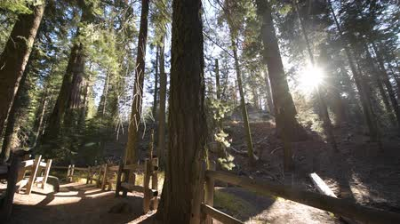 dişli doruk : Giant Sequoias Trailheads. Wooden Pathwalk in the Sequoia National Park in the California, United States of America. Stok Video