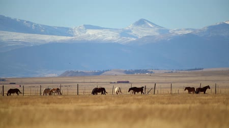 konie : Colorado Countryside Vista with Horses on the Grassland. Wideo