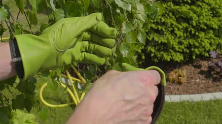 ogrodnik : Gardener Removing His Garden Gloves Closeup Slow Motion