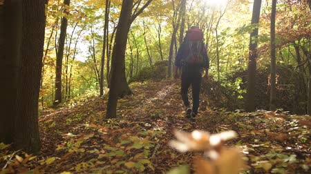 silvicultura : Caucasian Hiker with Backpack on a Sunny Fall Foliage Trailhead.