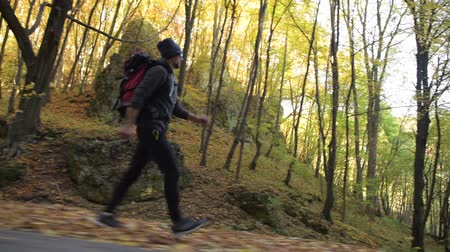 silvicultura : Hiker with Backpack on a Trail in the Forest. Scenic Autumn Foliage.