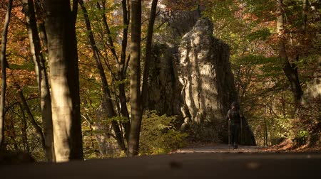 silvicultura : Caucasian Hiker on a Hike in the Scenic Fall Season Forest. Stock Footage
