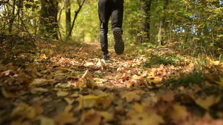silvicultura : Fall Season Forest Run. Runner on the Scenic Autumn Forestry Path