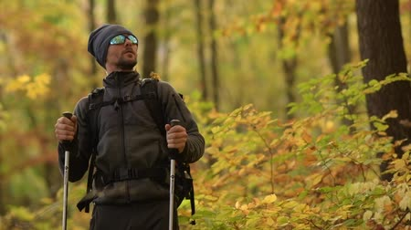 silvicultura : Caucasian Hiker Looking For Birds on a Tree. Fall Foliage Scenery. Scenic Hike.
