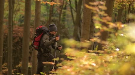 silvicultura : Hiker with Backpack Walking in the Forest in Slow Motion Footage. Vídeos