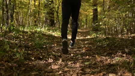 silvicultura : Slow Motion Footage of Sportsman Run in a Forest. Fall Foliage Scenery.