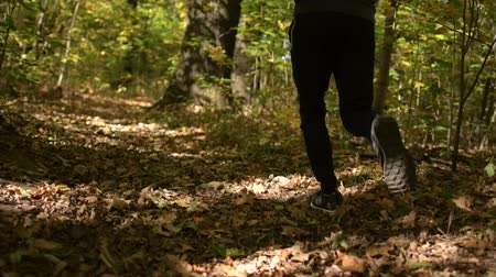silvicultura : Caucasian Sportsman Taking Short Daily Jogging in a Forest. Slow Motion Footage. Vídeos