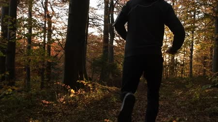 silvicultura : Forest Running During Scenic Sunset. Slow Motion Footage. Healthy Lifestyle Theme.