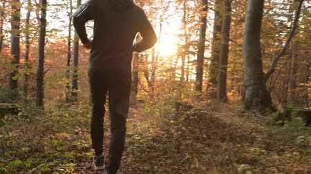 silvicultura : Scenic Forest Run During Sunset. Sportsman During Fall Season Jogging