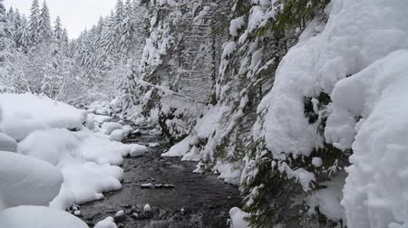 silvicultura : Scanic Winter Landscape with Small Mountain River and the Forest. Stock Footage