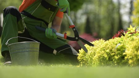 trim : Agriculture Industry. Gardener Trimming Plants Using Garden Scissors. Closeup Video.
