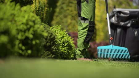 ogrodnik : Professional Gardener Raking Grass in a Backyard Garden. Garden Maintenance
