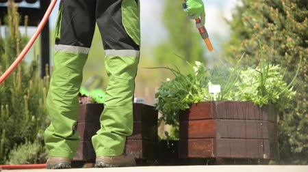 locsolás : Herbs Watering Using Garden Hose. Garden Job.