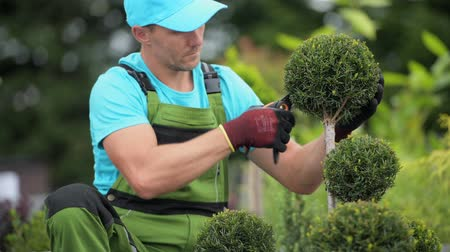 tvarování : Caucasian Gardener in His 30s Trimming His Backyard Garden Trees.
