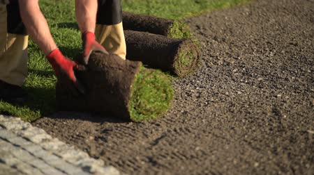 enrolado : New Turf Grass Installation by Professional Gardener. Rolls of Grass on the Backyard.