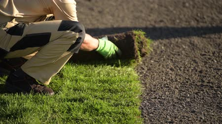 enrolado : Natural Grass Installation by Professional Caucasian Gardener in His 30s.