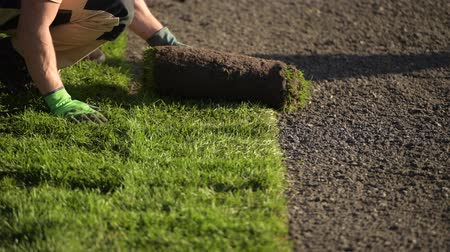 installer : Roll of New Natural Grass Turf Installed by Professional Gardener. Landscaping Industry. Stock Footage